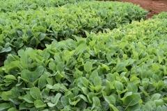 Vegetable seedlings in a nursery