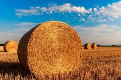 straw-bales-726976_640