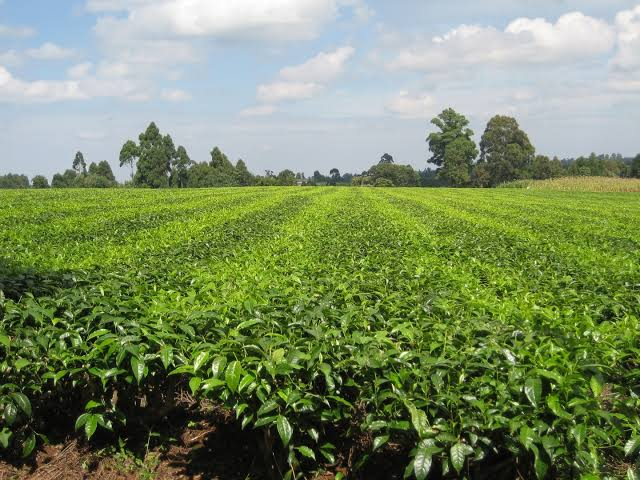 Agriculture News in East Africa 1