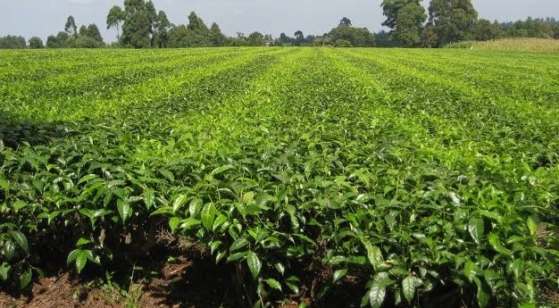 Kilimo News | Get Latest Agriculture News in East Africa 20
