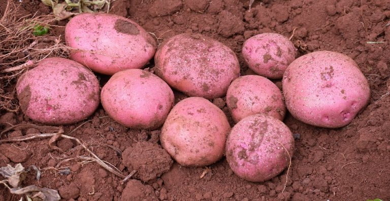 Kilimo News | Get Latest Agriculture News in East Africa 29