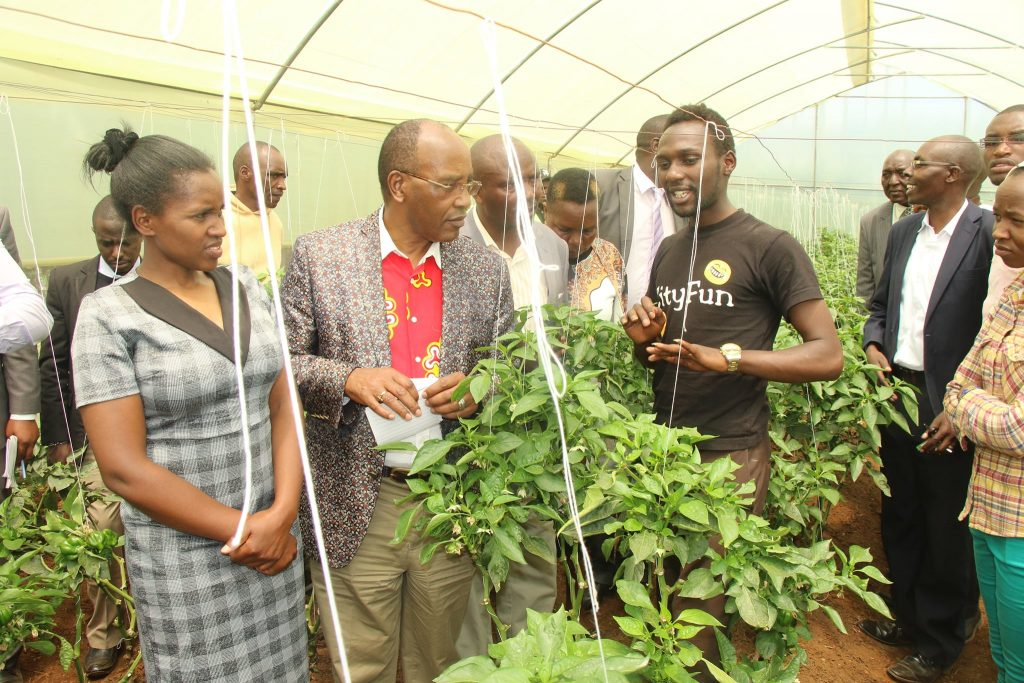 Youth group finds a niche in Capsicum growing 1