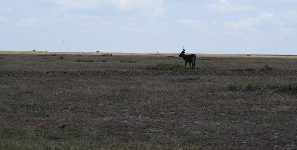 Dry land 1 min