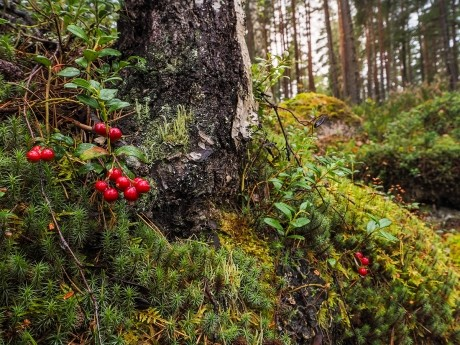 7 secrets that forests have been keeping from you 1