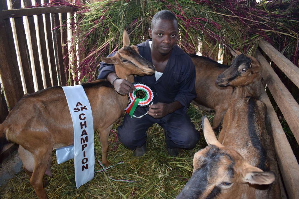 Macharia dairy goat 1