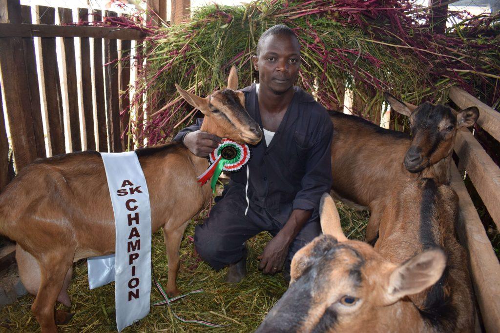 Macharia dairy goat 2