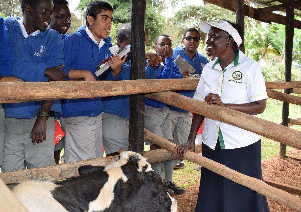 Dairy farming in Nairobi City 1