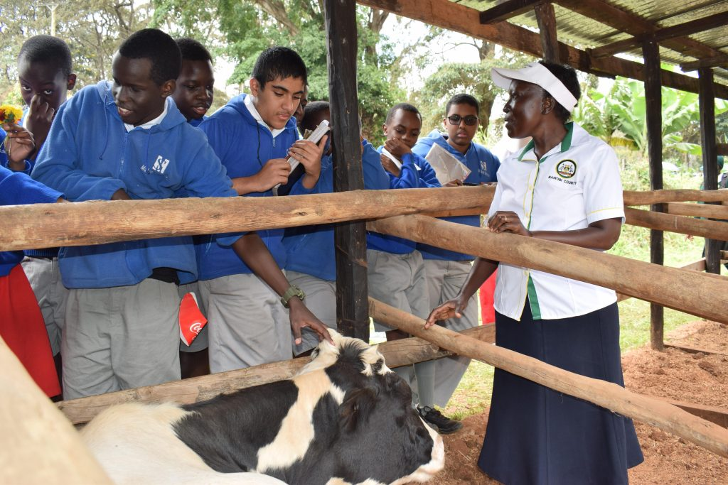 Dairy farming in Nairobi City 2