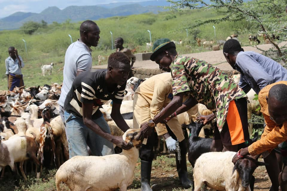 Pastoralists to benefit from cross border livestock treatment exercise 1