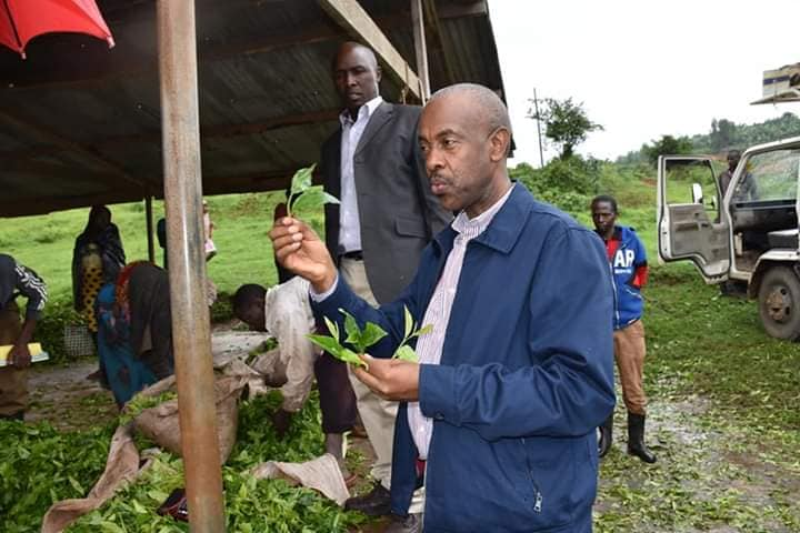 Uganda supports tea farmers in Buhweju District 1