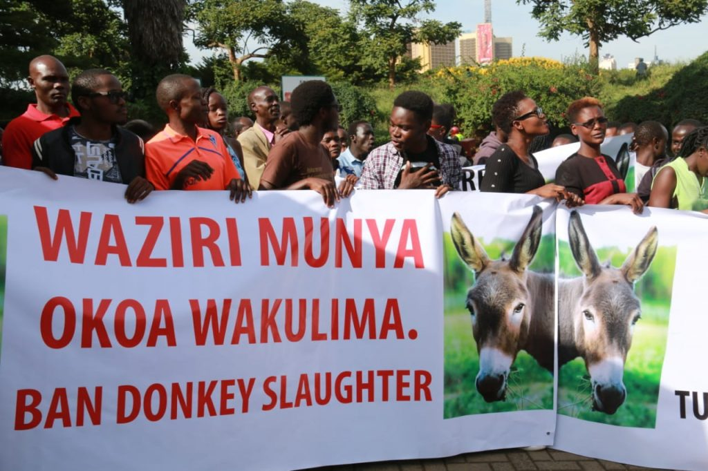 China to feel the pinch as Kenya bans trade in donkey meat and products 2