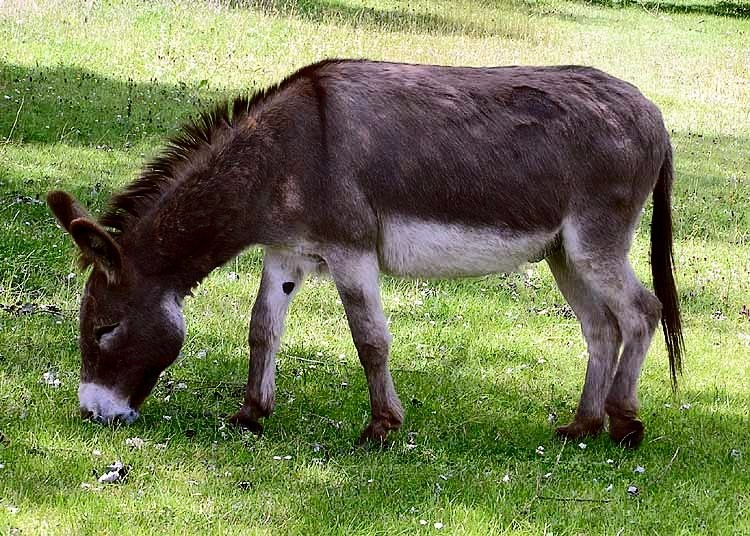 China to feel the pinch as Kenya bans trade in donkey meat and products 3