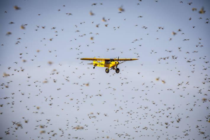 Germany contributes €17 million   to combat  Desert Locust upsurge in East Africa 1