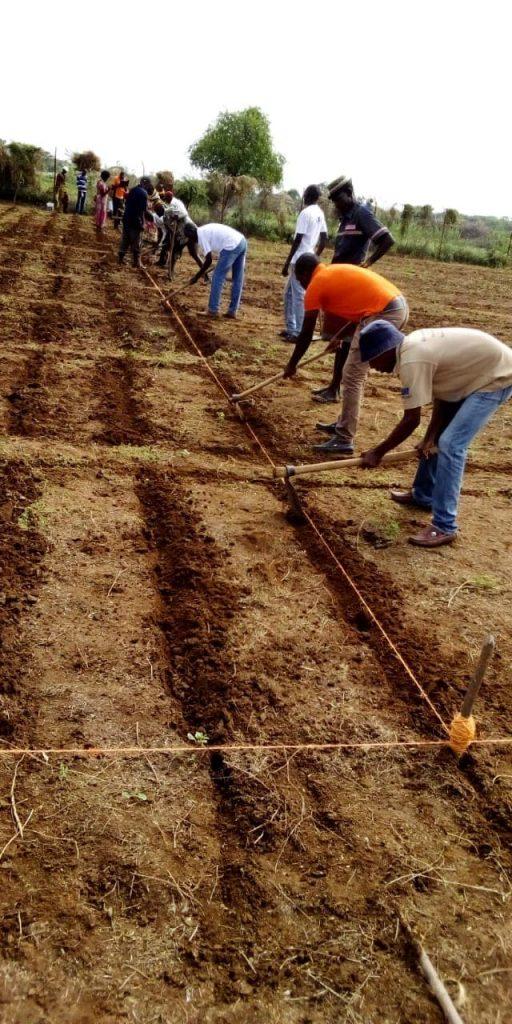 Turkana County,Egerton and FAO trial farm 5
