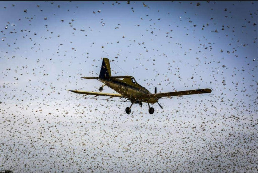 East Africa to benefit from $1.5 million by AfDB to fight locusts 1