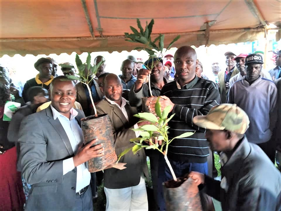 You could be jailed for cutting down an avocado tree in Murang'a 3