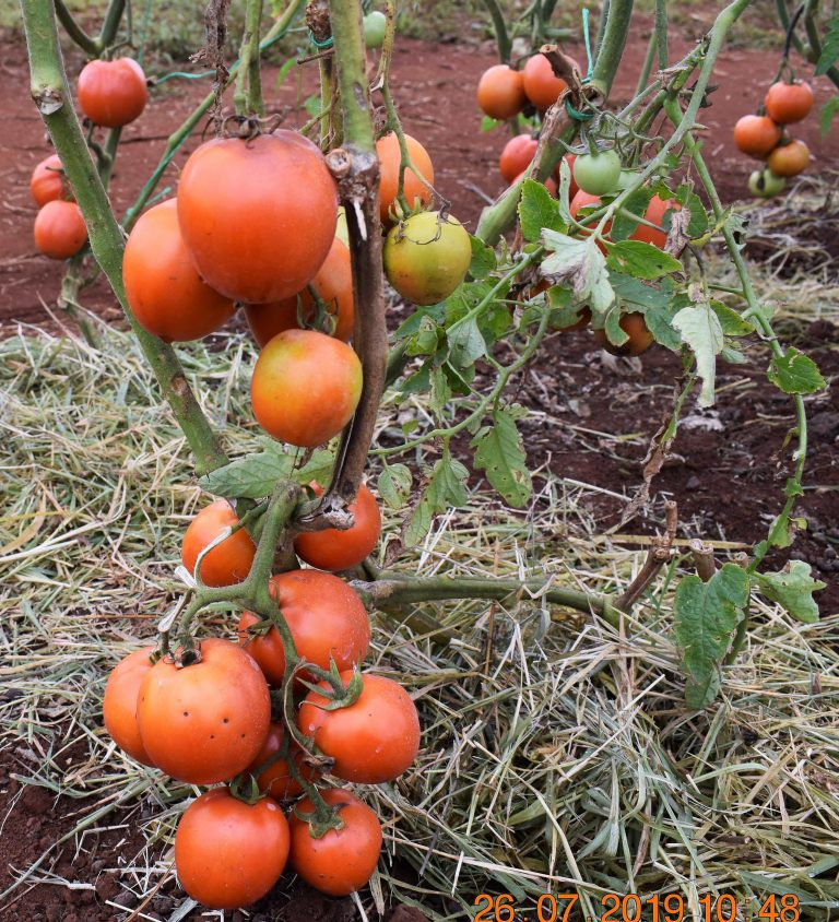 Kilimo News | Get Latest Agriculture News in East Africa 5