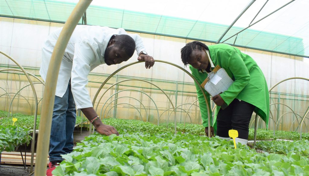 The couple who lost savings in agriculture and bounced back to seedling propagation 2