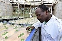 Agriculture News in East Africa 29