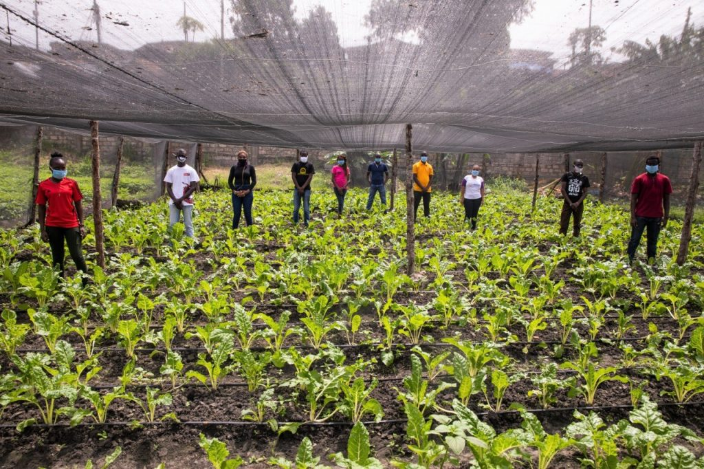 Youth group engaging in urban farming in Mombasa 1