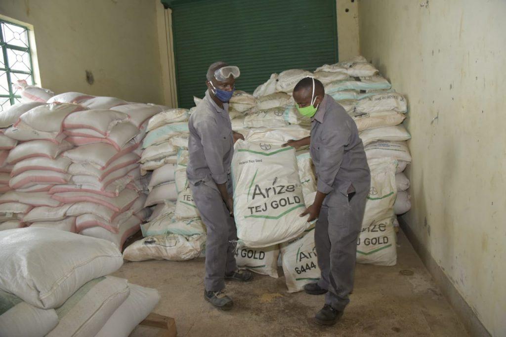 Rice farmers in Kirinyaga receive 13,000 kgs of seeds 1