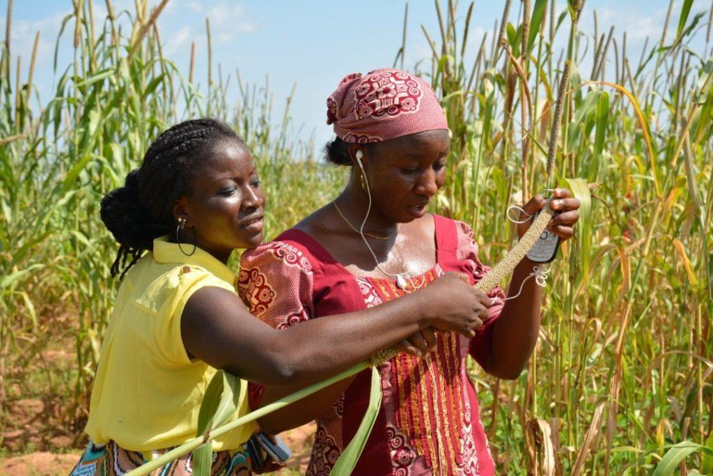 female farmers on pearl millet farm