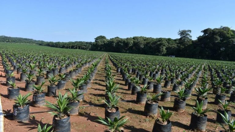 Kilimo News | Get Latest Agriculture News in East Africa 3