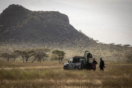 FAO spraying locusts 1