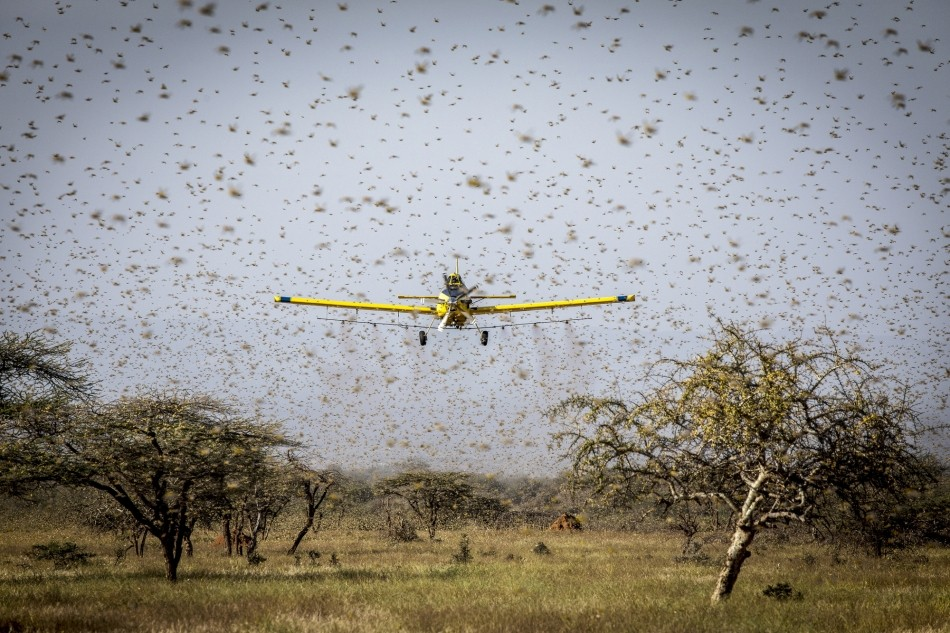 Fao plane spraying locusts