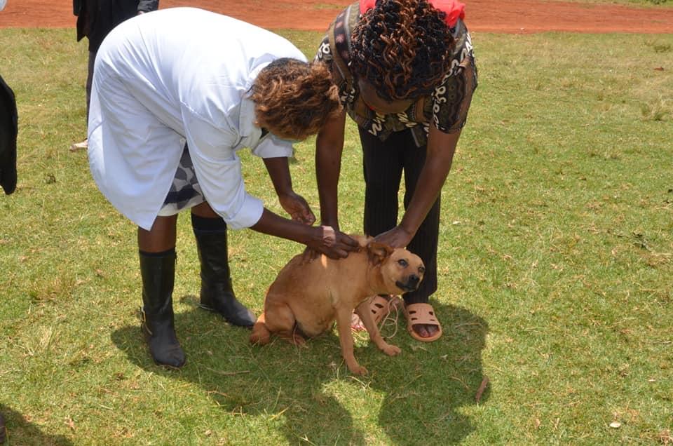 Rabies vaccination Nyeri