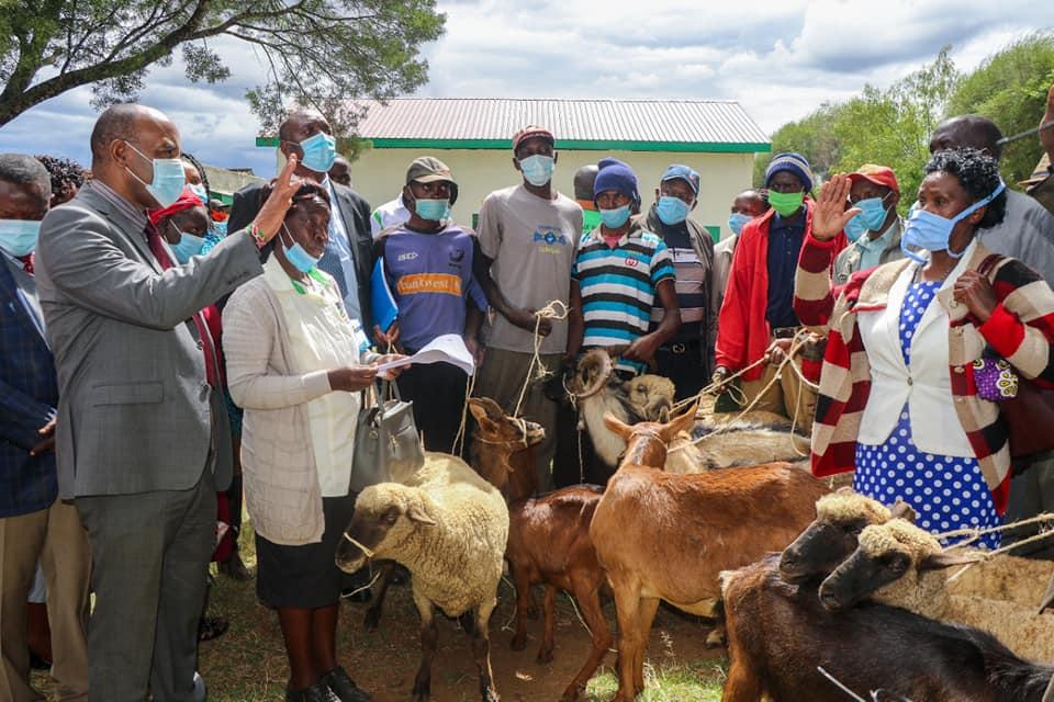 Nyandarua dairy goats distribution