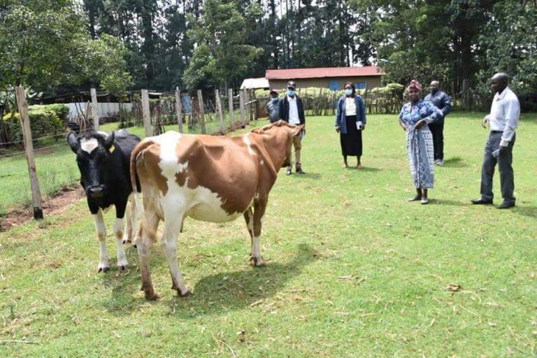 Dairy farmers in Uasin Gishu