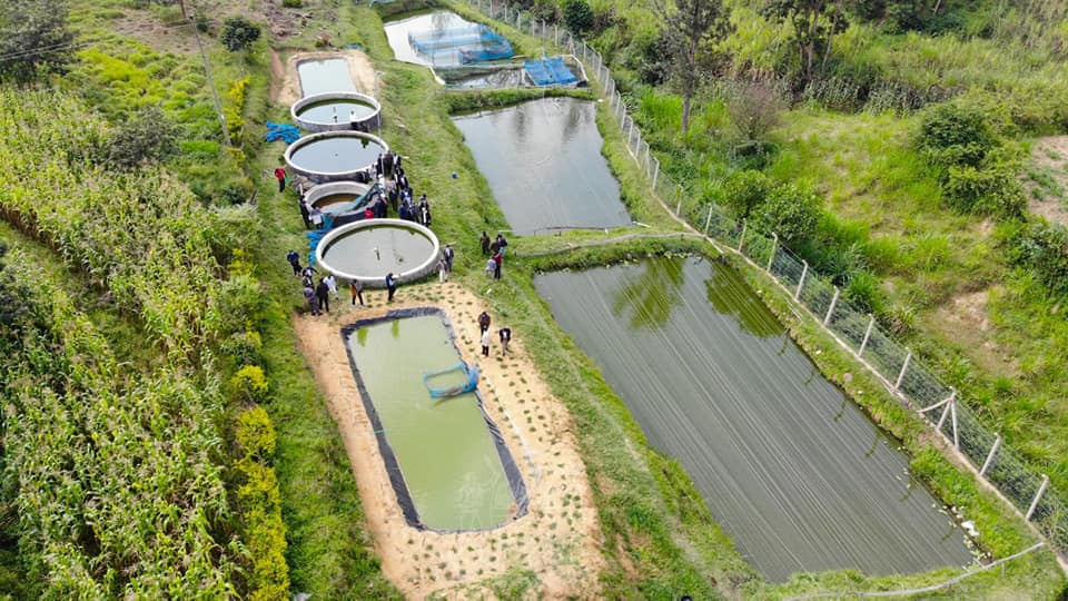 Jafi Fish Farm at Eshisiru Lurambi Sub County.